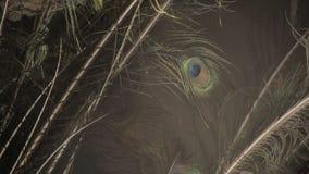 Φτερό Peacock απόθεμα βίντεο