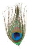 φτερό peacock Στοκ Εικόνες