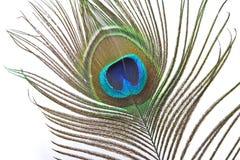 φτερό peacock Στοκ Φωτογραφίες