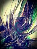 Φτερό Peacock Στοκ εικόνα με δικαίωμα ελεύθερης χρήσης