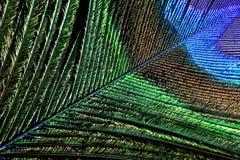 Φτερό Peacock Στοκ εικόνες με δικαίωμα ελεύθερης χρήσης