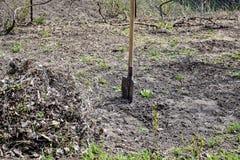 Φτυάρι που κολλιέται στο έδαφος στην περιοχή κήπων στοκ εικόνα
