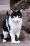 Φτωχή γάτα στοκ εικόνες