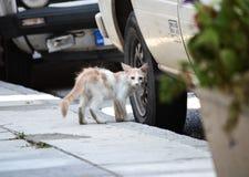 Φτωχή και άρρωστη μικρή γάτα Στοκ Εικόνες