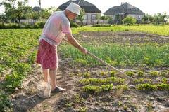 Φτωχός αγρότης που σκάβει με σκαπάνη το φυτικό κήπο στοκ εικόνα