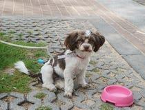 Φτωχό σκυλί μόνο στην οδό Στοκ φωτογραφία με δικαίωμα ελεύθερης χρήσης
