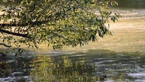 Φυκώδης επιφάνεια νερού άνθισης του ποταμού και της κλίσης με τη ροή φιλμ μικρού μήκους
