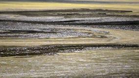 Φυκώδης επιφάνεια νερού άνθισης του ποταμού και της κλίσης με τη ροή απόθεμα βίντεο