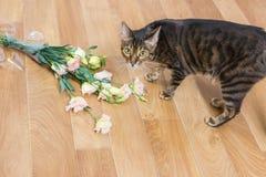 Φυλή γατών toyger που πέφτουν και που σπάζουν βάζο γυαλιού των λουλουδιών στο flo Στοκ Φωτογραφίες