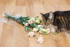 Φυλή γατών toyger που πέφτουν και που σπάζουν βάζο γυαλιού των λουλουδιών Στοκ εικόνα με δικαίωμα ελεύθερης χρήσης