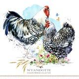 Φυλή κοτόπουλου Wyandotte Καλλιέργεια πουλερικών εσωτερικό αγρόκτημα birdFriesian διανυσματική απεικόνιση