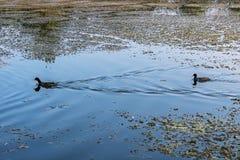 Φυλή στη λίμνη στοκ φωτογραφία
