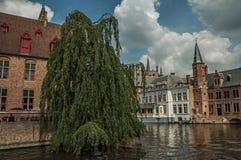 Φυλλώδες δέντρο με τα παλαιά κτήρια τούβλου στην άκρη καναλιών ` s σε μια ηλιόλουστη ημέρα στη Μπρυζ Στοκ εικόνες με δικαίωμα ελεύθερης χρήσης
