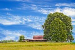 Φυλλώδες δέντρο στην επαρχία Στοκ Φωτογραφία