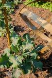 Φυλλώδη πράσινα που αυξάνονται σε έναν ηλιόλουστο κήπο στοκ φωτογραφίες