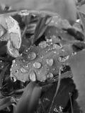 Φυσαλίδες νερού βροχής Στοκ Εικόνα