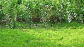 Φυσαλίδα σαπουνιών χτυπήματος στον κήπο απόθεμα βίντεο