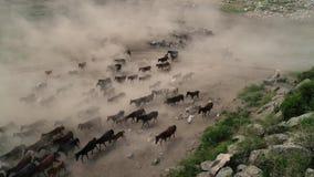 Φυσικά άλογα Άγρια άλογα Kayseri στην Τουρκία, η έννοια της ελευθερίας, της δύναμης, του ndependence iÌ ‡ και της ταχύτητας απόθεμα βίντεο