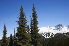 φυσικά ίχνη σκι βουνών στοκ φωτογραφία