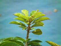 Φυσικά βγάζει φύλλα τον τρόπο ζωής κήπων λουλουδιών Στοκ εικόνες με δικαίωμα ελεύθερης χρήσης