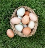 Φυσικά ζωηρόχρωμα αυγά στη φωλιά πουλιών στη χλόη για τις διακοπές Πάσχας Στοκ εικόνες με δικαίωμα ελεύθερης χρήσης