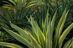 Φυσικά και όμορφα πράσινα φύλλα στον ήλιο στοκ φωτογραφίες