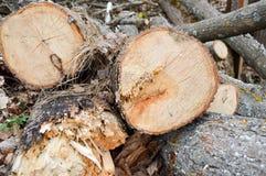 Φυσικά κούτσουρα περικοπών, κορμοί δέντρων, κλάδοι σε ένα τμήμα σε ένα πριονιστήριο στο δάσος στοκ εικόνες με δικαίωμα ελεύθερης χρήσης