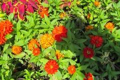 Φυσικά κόκκινα λουλούδια Στοκ Φωτογραφία