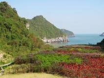 Φυσικά νησιά στη θάλασσα του μακριού κόλπου εκταρίου, Βιετνάμ Στοκ εικόνες με δικαίωμα ελεύθερης χρήσης