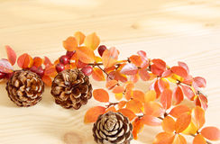 Φυσικά λουλούδια κώνων πεύκων με τα πορτοκαλιά φύλλα Στοκ εικόνα με δικαίωμα ελεύθερης χρήσης