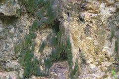 Φυσικά σπασμένα πέτρα και βρύο στο δάσος στοκ εικόνες