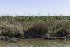 Φυσικά τοπία επιφύλαξης Botrona Diaccia Στοκ Εικόνα