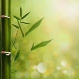 Φυσικές ανασκοπήσεις zen Στοκ φωτογραφία με δικαίωμα ελεύθερης χρήσης
