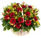 Φυσικές κόκκινες gerberas και τουλίπες σε ένα καλάθι Στοκ Εικόνες