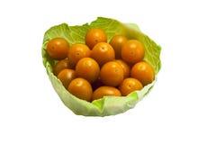φυσικές ντομάτες φύλλων &kappa Στοκ Εικόνες