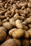 Φυσικές οργανικές πατάτες σε μεγάλη ποσότητα στην αγορά της Farmer Στοκ Εικόνες