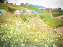 Φυσικές χλόες στα βουνά στοκ εικόνα με δικαίωμα ελεύθερης χρήσης