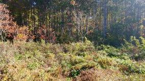 Φυσική άγρια φύση υγρότοπων Στοκ φωτογραφίες με δικαίωμα ελεύθερης χρήσης