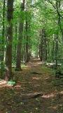 Φυσική άγρια φύση υγρότοπων Στοκ εικόνα με δικαίωμα ελεύθερης χρήσης