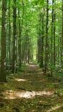 Φυσική άγρια φύση υγρότοπων Στοκ φωτογραφία με δικαίωμα ελεύθερης χρήσης