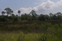 Φυσική άποψη ενός ανοικτού λιβαδιού με τα δέντρα και τη χλόη στοκ φωτογραφία με δικαίωμα ελεύθερης χρήσης