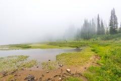 Φυσική άποψη του δάσους, του λιβαδιού και της λίμνης με την ομίχλη την ημέρα στη λίμνη Tipzoo, ΑΜ πιό βροχερή, Ουάσιγκτον, ΗΠΑ Στοκ Εικόνα
