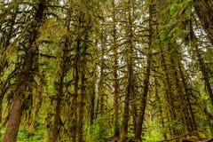 Φυσική άποψη των δασωδών περιοχών στο τροπικό δάσος Hoh στοκ εικόνες