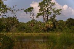 Φυσική άποψη των δέντρων και της χλόης που περιβάλλουν μια λίμνη στοκ φωτογραφίες