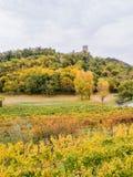 Φυσική άποψη των πρόσφατα συγκομισμένων τομέων σταφυλιών το φθινόπωρο κοντά σε Buje στοκ φωτογραφία με δικαίωμα ελεύθερης χρήσης
