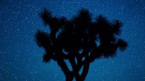Φυσική έναστρη σκιαγραφία δέντρων joshua ουρανού φιλμ μικρού μήκους