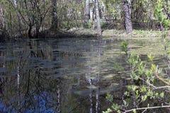 Φυσική λίμνη ελών Στοκ Φωτογραφία