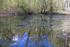 Φυσική λίμνη ελών Στοκ εικόνα με δικαίωμα ελεύθερης χρήσης