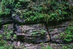 Φυσική ανασκόπηση Πράσινες τροπικές εγκαταστάσεις στις πέτρες βουνών βράχου Στοκ Φωτογραφία