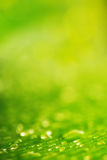Φυσική ανασκόπηση Πτώσεις νερού πέρα από τη φρέσκια πράσινη σύσταση φύλλων Στοκ Εικόνες